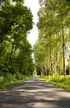 Free Roadway Trough A Crowded Forest Royalty Free Stock Image - 13703096