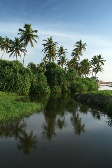 Free Coconut Palms And Water Stock Photos - 13703403
