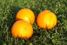 Three  Oranges In Grass Stock Photography