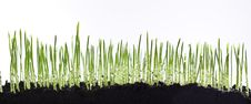 Free Grass Stock Photos - 13704173