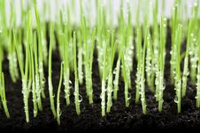 Free Grass And Water Drops Stock Photo - 13704180