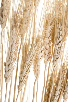 Free Wheat Stock Image - 13704461