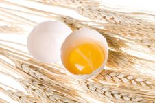 Free Egg Stock Images - 13704464