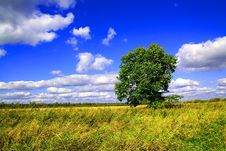 Free Oak On Field Stock Photos - 13706833