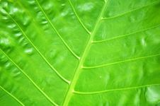 Free Green Leaf Stock Image - 13709411