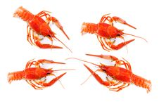 Free Crayfish On White Stock Photography - 13709442
