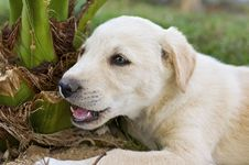 Young Puppy Chewing A Plant Royalty Free Stock Photos