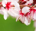 Free Spring Flowers Royalty Free Stock Image - 13717536