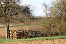 Free Apple Tree With A Stack Of Wood Stock Photos - 13710123