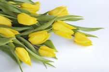 Free Bunch Of Yellow Tulips Royalty Free Stock Images - 13710279