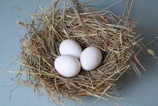 Free Three Eggs Lies At Hay Stock Images - 13710304