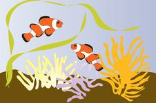 Free Anemonefishes Stock Photo - 13712070