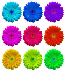 Free Multicolored Flowers Stock Image - 13712081