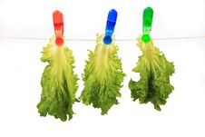 Free Fresh Green Leaf Lettuce Stock Photo - 13714860