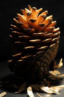 Free Pine Cone Royalty Free Stock Image - 13715216