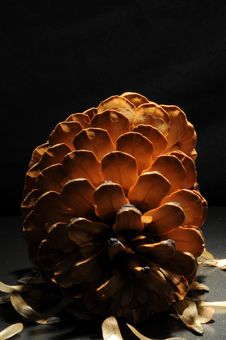 Free Pine Cone On It S Side Royalty Free Stock Photos - 13715218
