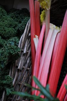 Free Rhubarb In Basket With Curly Lettuce Stock Photography - 13715222