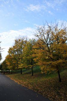 Free Autumn Path Stock Photos - 13715233