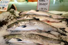 Free Fresh Fish For Sale Royalty Free Stock Photography - 13715667