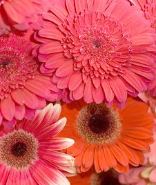 Free Beautiful Fresh Flowers In A Bouquet Royalty Free Stock Photos - 13719948