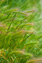 Free Grass In A Meadow Stock Image - 13725241