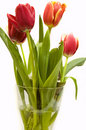 Free Tulips Bouquet Royalty Free Stock Photo - 13725615