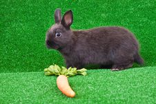 Free Bunny And Carrot On Grass Royalty Free Stock Photos - 13724598