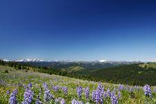 Summer Alpine Stock Photo
