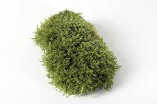 Moss On White Background Stock Photos