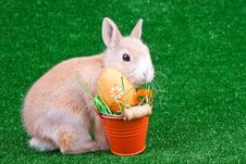 Easter Egg And Bunny Stock Image