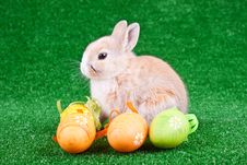 Rabbit, Easter Eggs On Grass Royalty Free Stock Photos