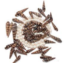 Neckchain With Seashells Stock Image