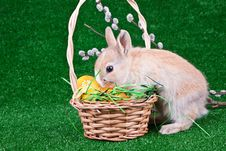 Bunny On Easter Eggs Stock Images