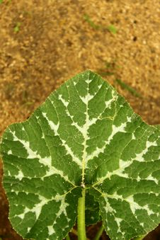 Free Heart Leaf Royalty Free Stock Photography - 13728207