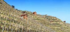 Free Wine Region Royalty Free Stock Image - 13728326