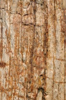 Free Texture And Color, Surface Of Wooden Fossil Stock Photo - 13728470