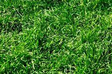 Free Green Grass Stock Photo - 13728740