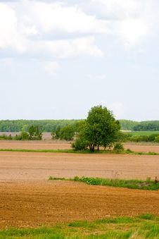 Free Lonely Tree Among The Fields Stock Photos - 13729203