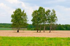 Free Lonely Tree Among The Fields Royalty Free Stock Image - 13729216
