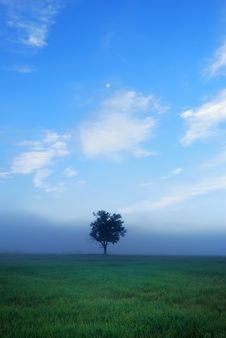 Free Lonely Tree Royalty Free Stock Photo - 13729755