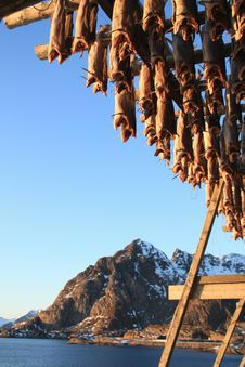 Free Stockfish And Henningsvaer S Mounts Stock Images - 13729764