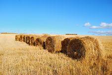 Free Harvesting Royalty Free Stock Photos - 13729868