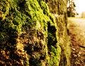 Free Moss On Stone Stock Image - 13735341
