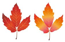 Free Maple Leaf Royalty Free Stock Image - 13731406