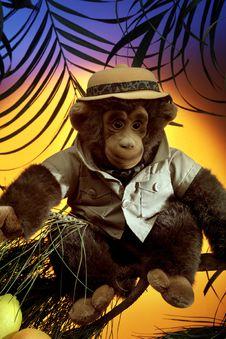 Free Monkey Stock Photos - 13732253