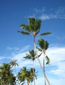 Palm Trees And Sky Background Royalty Free Stock Photo
