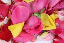 Free Red Rose Stock Images - 13734084