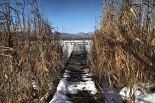 Free Pier In The Reed Royalty Free Stock Photography - 13734427