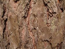Free Тне Texture Tree Bark Royalty Free Stock Image - 13734646