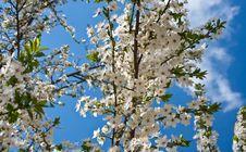 Free Spring Stock Image - 13734811
